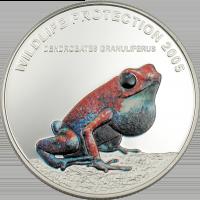 Frog – red Dendrobates Granuliferus