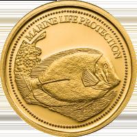 Surgeonfish – Gold