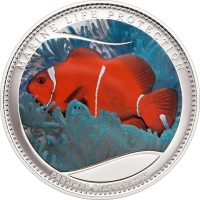 Anemonefish – Cu ag-plated