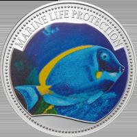 Surgeonfish – Silver