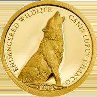 Endangered Wildlife – Canis lupus chanco